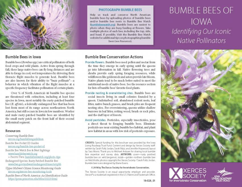 Cover of Xerces brochure Bumble Bees of Iowa