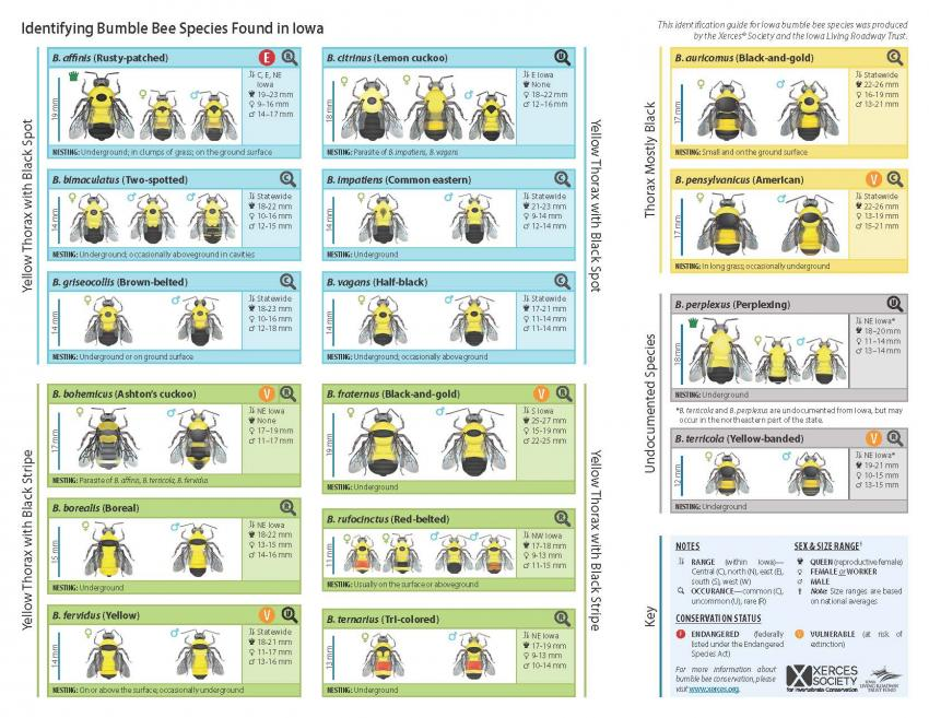 Chart Identifying Bumble Bee Species Found in Iowa