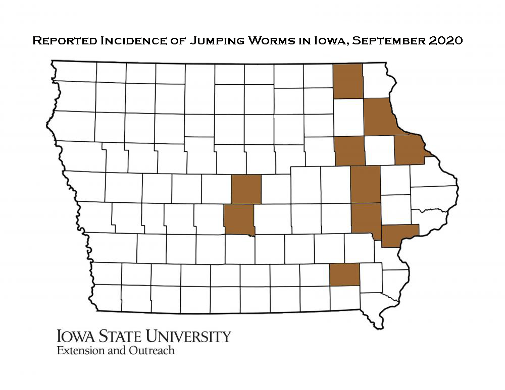 Map of Iowa showing current distribution of confirmed jumping worm infestations as of September 14, 2020