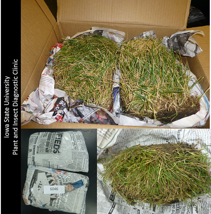Turf samples properly wrapped in newspaper