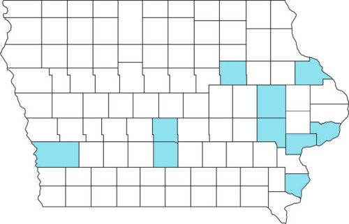 Counties in Iowa where the brown marmorated stink bug has been reported.  November 1, 2013.