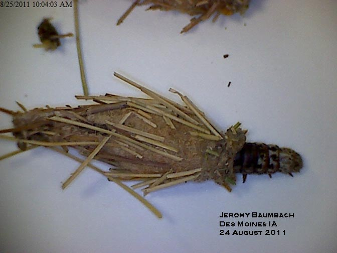 When Is It Too Late To Treat For Bagworms? | Horticulture and Home