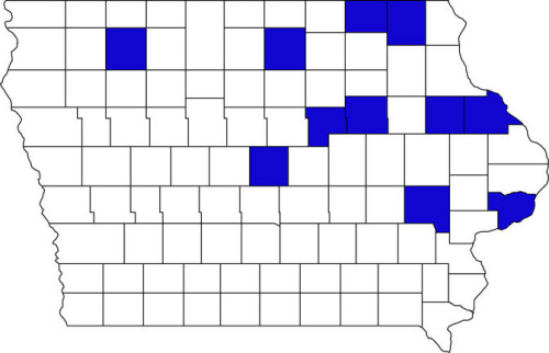 Reported incidence of black vine weevil in Iowa, 1977 - 2013.