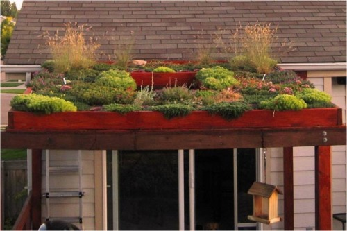 An example of a green roof on a reinforced pergola for a residential application.  Photo by Jennifer Bouselot.