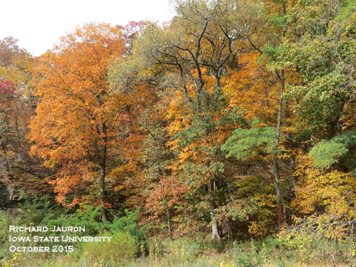 Colorful Fall Foliage, Ledges State Park near Boone IA.
