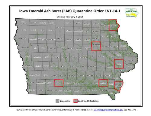 The entire state of Iowa is quarantined for the emerald ash borer.  Counties with confirmed EAB infestations are indicated in red.