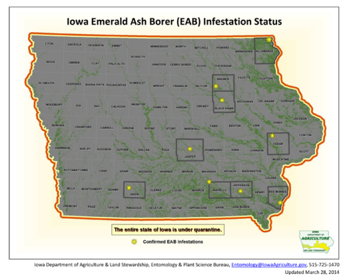 Jasper County Iowa Map.Emerald Ash Borer Confirmed In Jasper County Iowa Horticulture