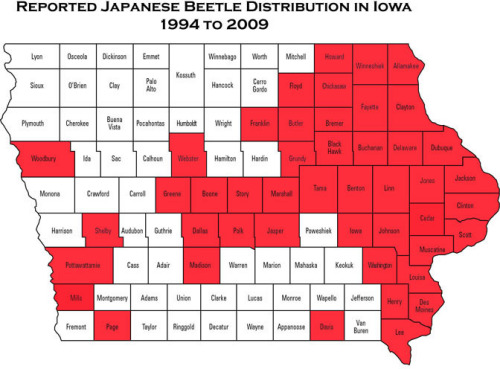 Counties in Iowa where Japanese beetles have been previously reported.