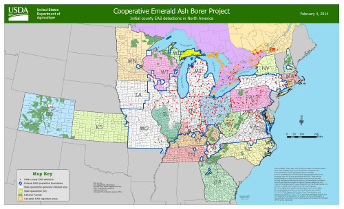 Initial county EAB detections.