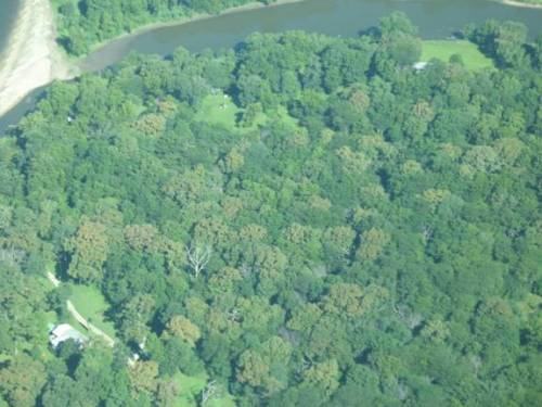 Aerial photo of a forest in Muscatine County taken in early August, showing many scattered brown bur oaks.