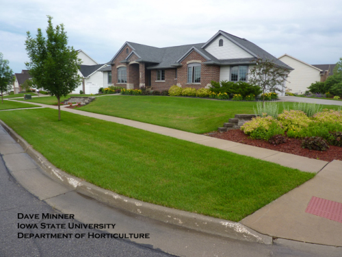 Picture 4B.  Same lawn as Picture 4A on 21 June 2010.