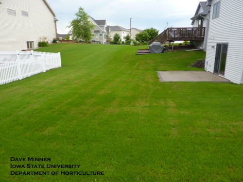 Picture 5B.  Same lawn as picture 5A, taken on 21 June 2010.