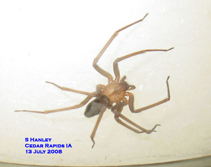 are spiders poisonous horticulture and home pest news