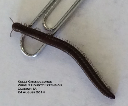 Millipedes have 4 legs (2 pairs) on each body segment.