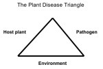 The Plant Disease Triangle