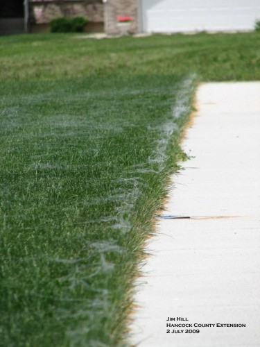 Spider webs along the driveway.  Photo by Jim Hill.
