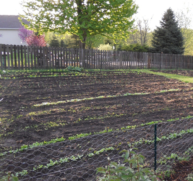 Early Spring Vegetable Garden Actions  Horticulture And -6080