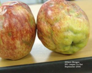 Apple maggot damage