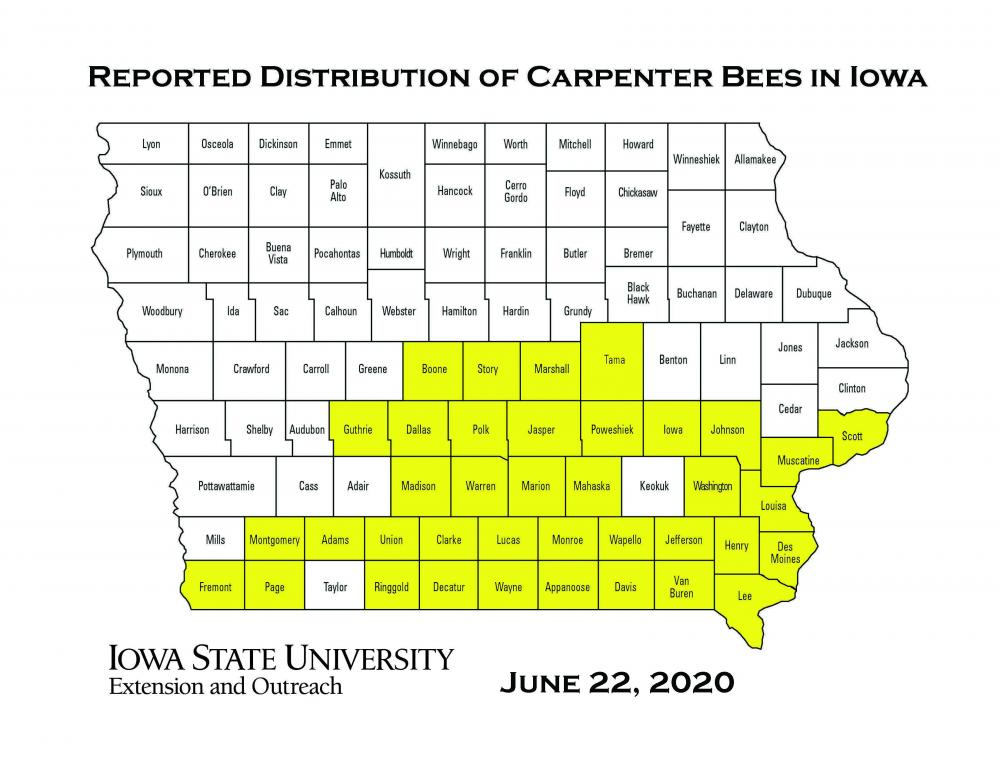 Map of Iowa showing current reported distribution of carpenter bees in Iowa.  June 22, 2020