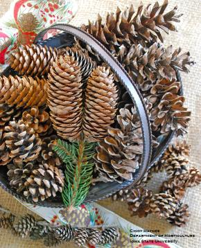 an assortment of cones in a decorative basket