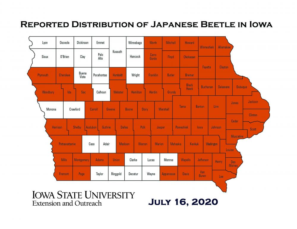 Map of Iowa showing current distribution of reported Japanese beetles as of July 16, 2020.