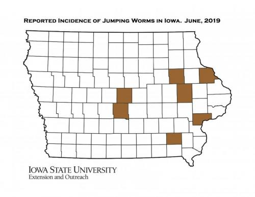 Map of Iowa showing counties that have reported jumping worms