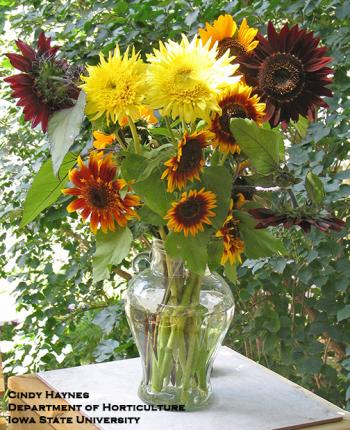variety of sunflowers in a vase
