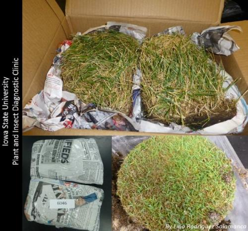 An example of proper samples from a lawn on the top, packaging on left bottom, and 1 of the two cores samples from a golf course.