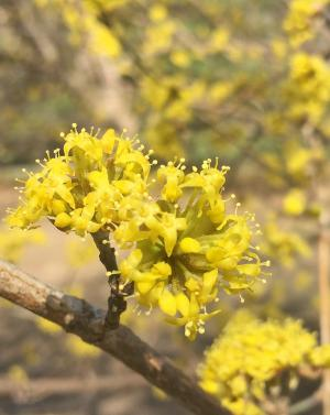 close up picture of small yellow flower clusters