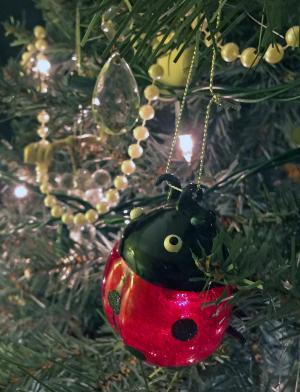 Picture of a ladybug ornament on Christmas tree