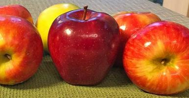 Picture of a variety of apple cultivars