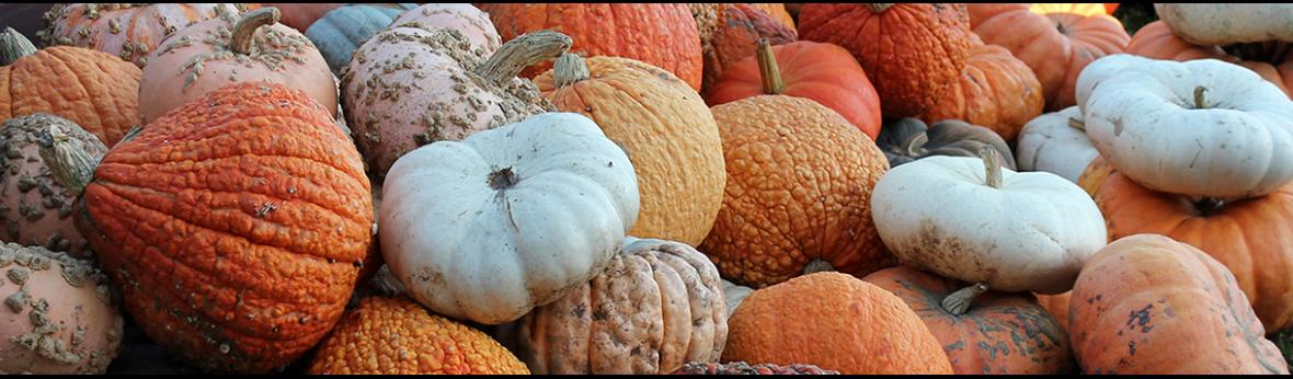 An array of orange, white, peach, and warty pumpkins