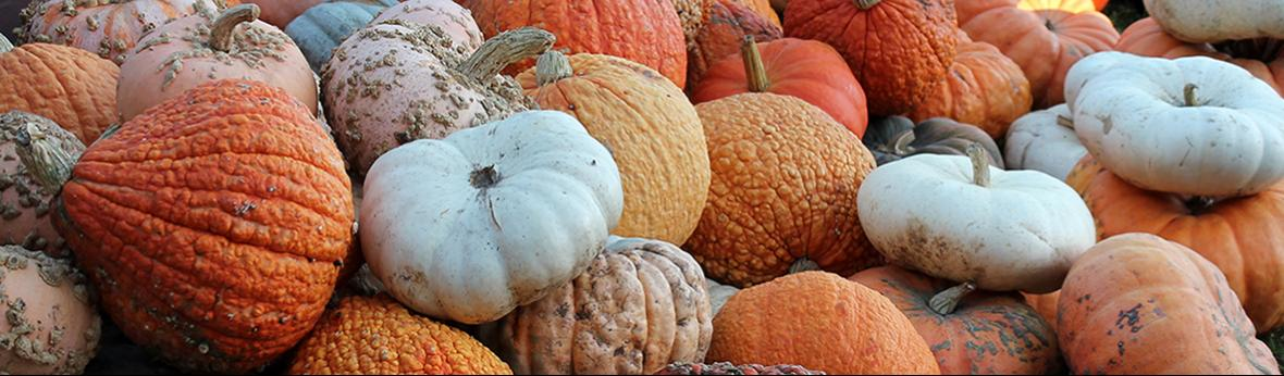 various shapes, sizes, and colors of pumpkins