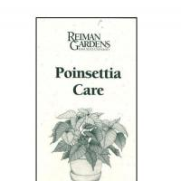 Poinsettia Care -- Reiman Gardens