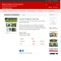 Common Problems of Ash Trees
