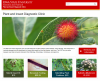 Check our new website clinic.ipm.iastate.edu we added more photos and videos!